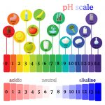 Clean With The Correct PH Value - Professional Cleaners In London. pH scale diagram with corresponding acidic or alcaline values for common substances, food, household chemicals . Litmus paper color chart. Colorful vector illustration in flat style isolated on white background.